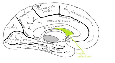 A Brain System That Appears To >> Limbic System Impact Per Brain Area Consequences