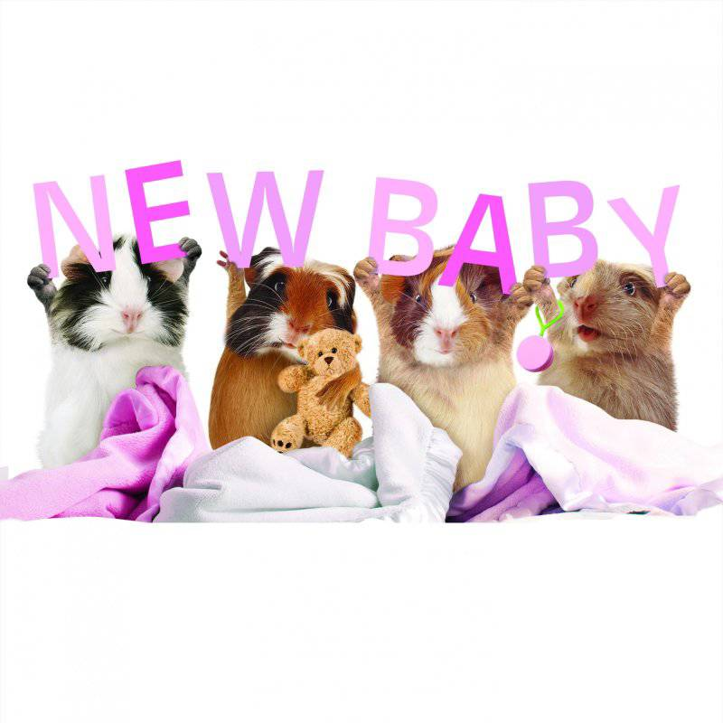 otter-house-kaart-met-new-baby-cavia-cardpartfront-1.jpg