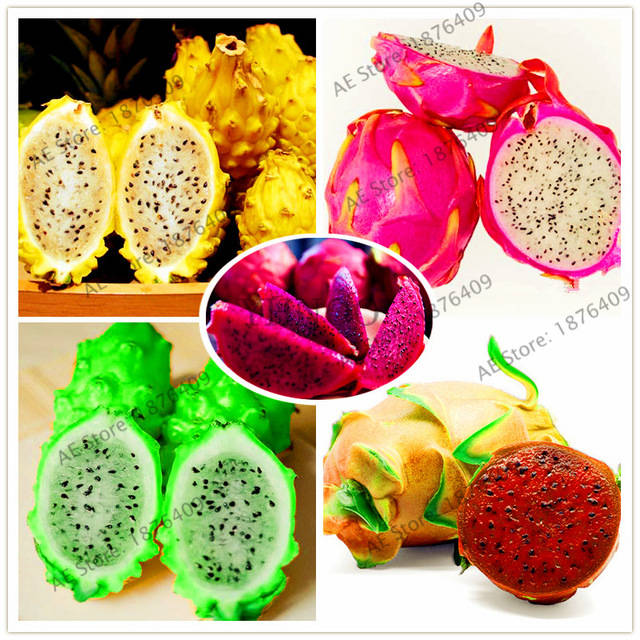 100pcs-bag-Dragon-Fruit-Pitaya-Organic-Seeds-Sweet-Tasty-Fruits-for-home-and-garden-plant-easyjpg_640x640-2.jpg