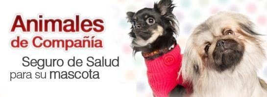 545x250-banner-animales-compania_large.jpg