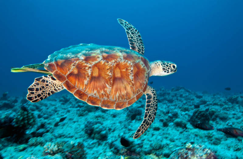 GREEN-SEA-TURTLE-900.jpg