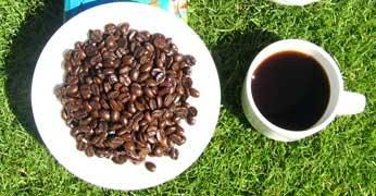 coffea-arabica-cafe_large.jpg