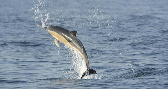 delfines-mercurio-estudio-k3BE--540x285abc.jpg