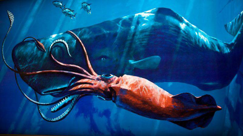 sperm-whale-vs-giant-squid-111_large.jpg