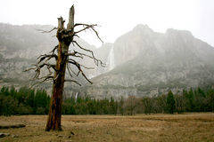 yosemite-de-winter-2343279.jpg