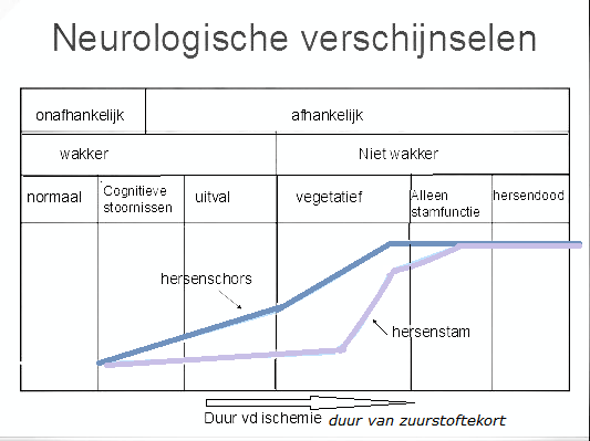 postanoxische-encephalopathie--2.png