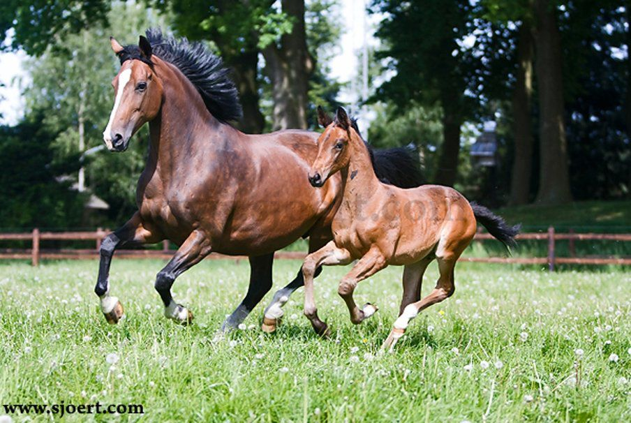 535740__mother-and-foal-running_p.jpg