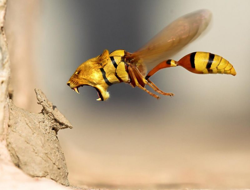 wtf-dierencombi-lion-wasp.large.jpg
