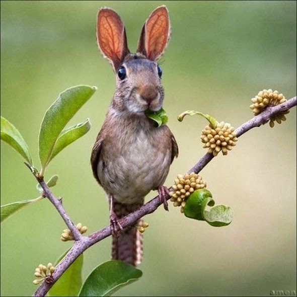 wtf-dierencombi-rabbitbird.large.jpg