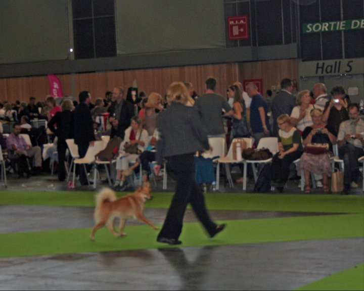 worlddogshow-maple.large.jpg