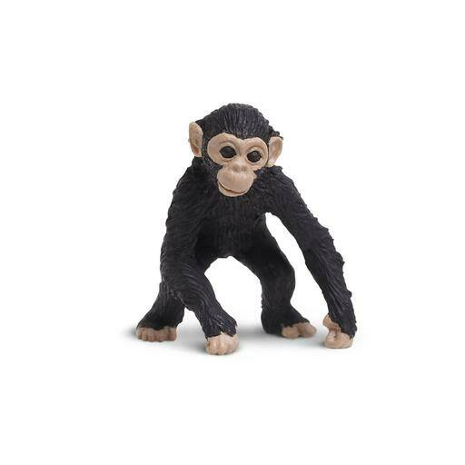 RB Chimpansee