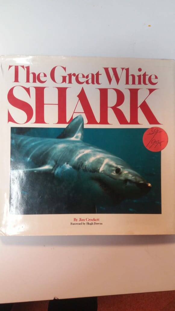 The great while Shark