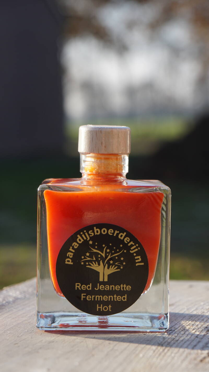 Red Jeanette Fermented Hot