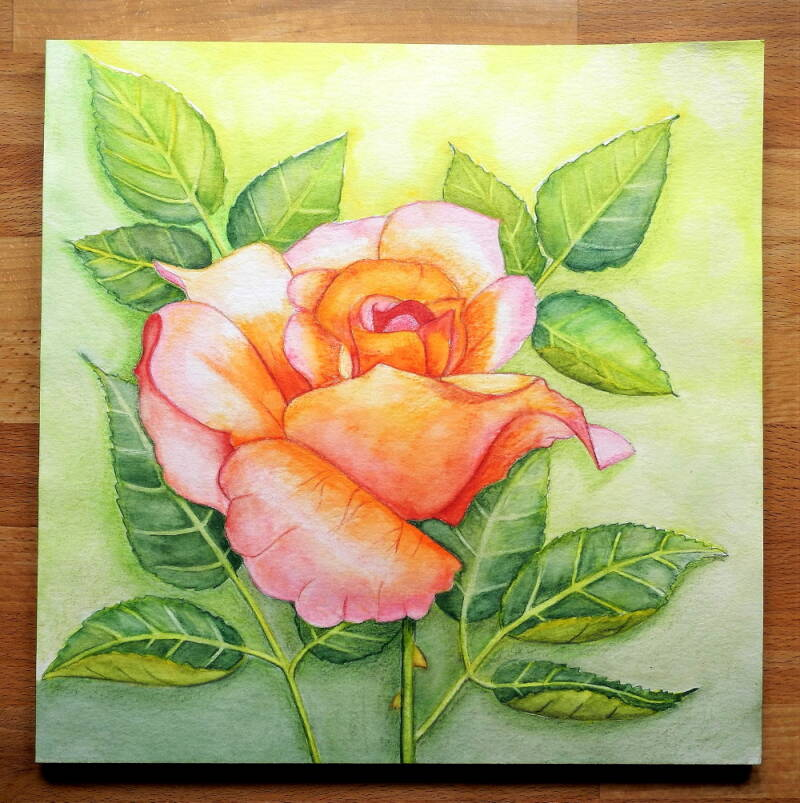 Rose orange Aquarell