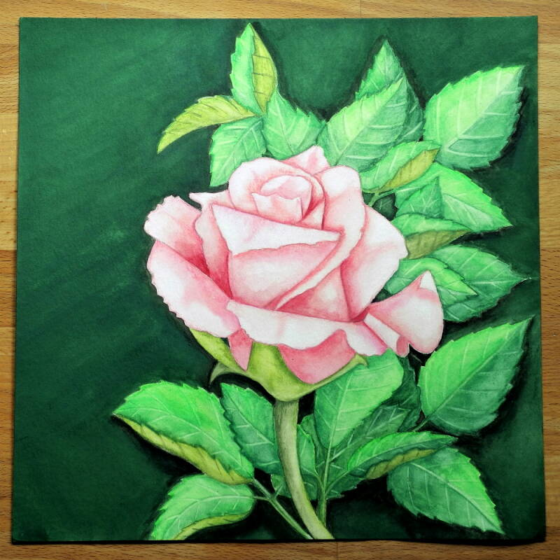 Aquarell Rose pink