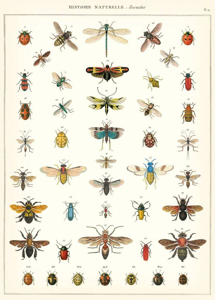"Cavallini Poster ""Insects"""