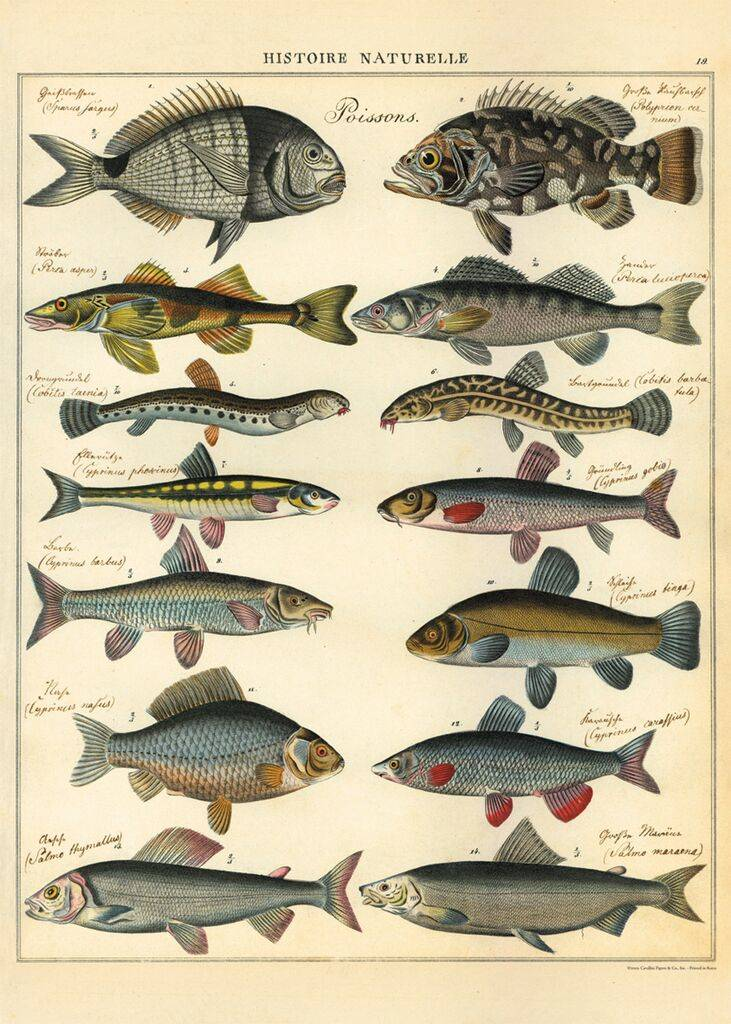 "Cavallani Poster ""Fishes"""