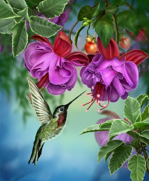 C.B. Crystal Art Kit A110L Hummingbird partial  40x50 cm