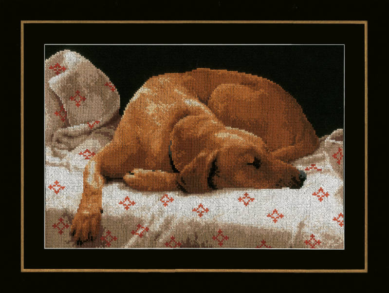 Kit L. Sleeping dog pn-0164050