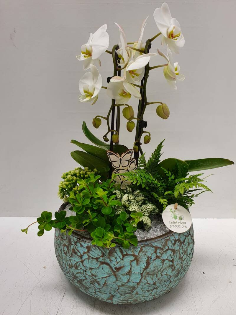 Orchidee in handgemaakte pot