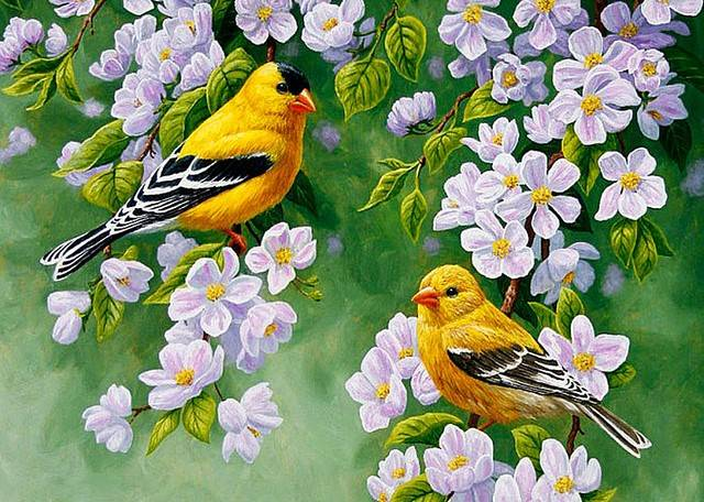 gele vogels -Diamond Painting