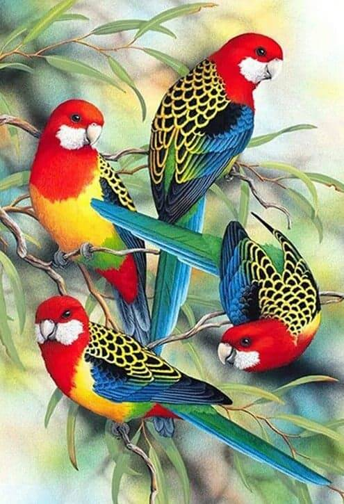 4 rosella's - Diamond Painting