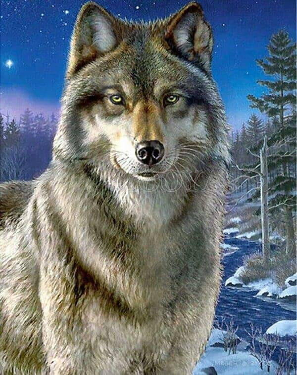 Wolf , rivier - Diamond Painting Rond