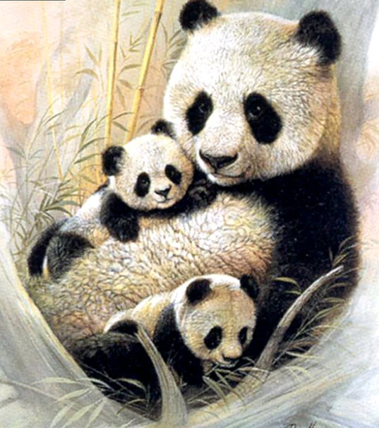 panda , jongen - Diamond painting