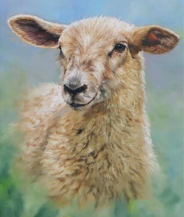 Schaap - Diamond Painting Rond