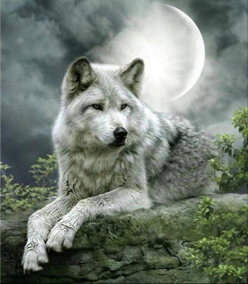 wolf op rots - Diamond painting rond