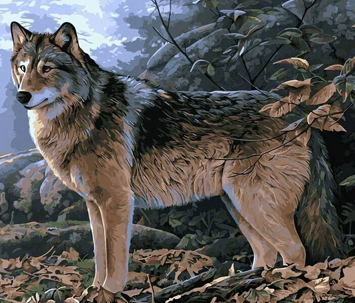 Wolf in bos - Diamond painting
