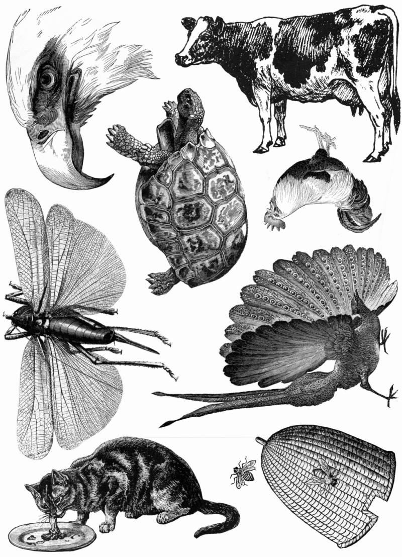 PLATESW115 Plate 115 Tiere