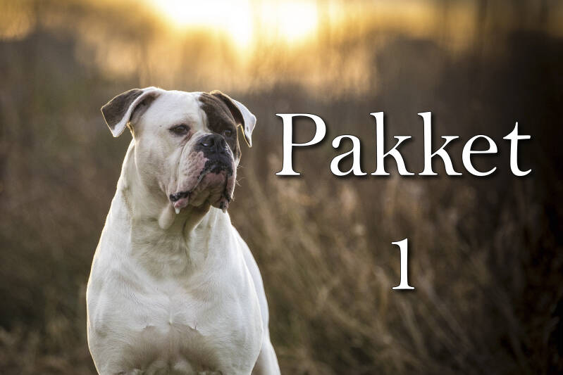 Hond of mens - Pakket 1