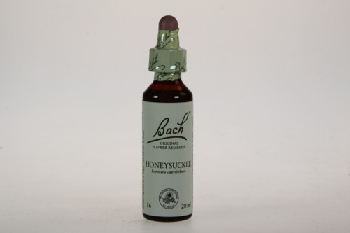 Bach Honeysukle - Kamperfoel 20ml