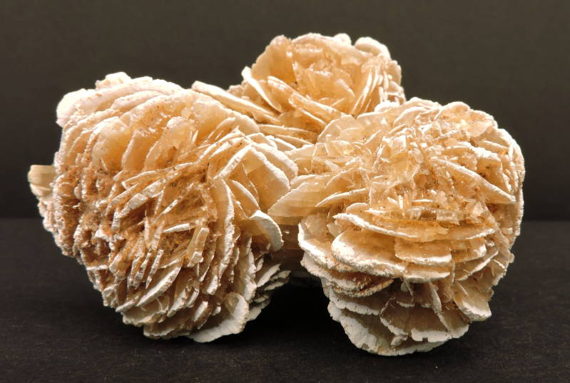 Desert rose from Mexico - cabinet size
