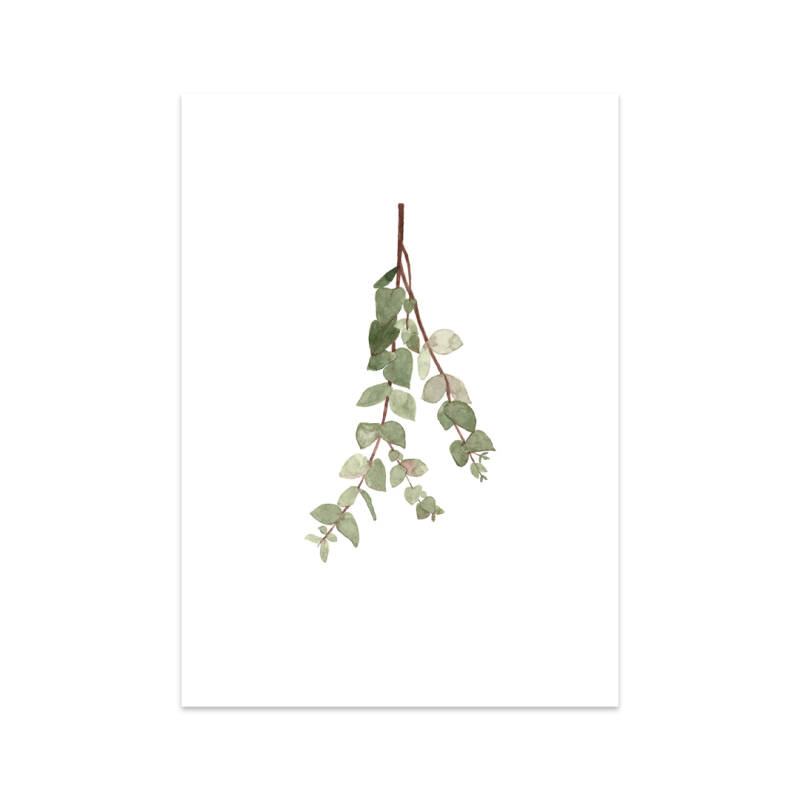 A twig of Eucalyptus A4 poster