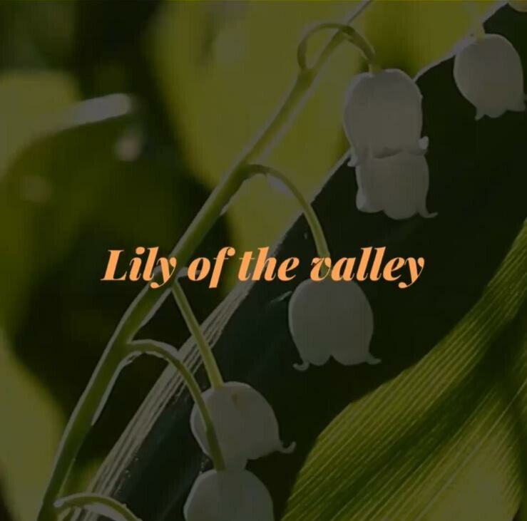 Wax Melts - Lily of the valley