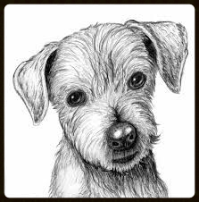 pencil drawings of dogs