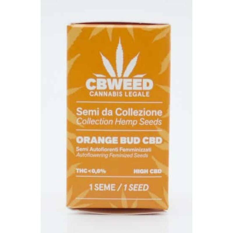 """Orange Bud"" CBD Autoflowering Feminized Seeds 1 semilla"