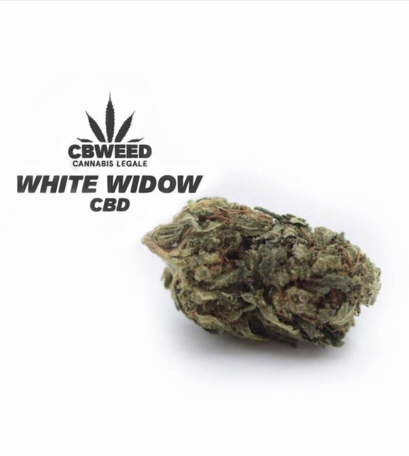 White Widow CBD