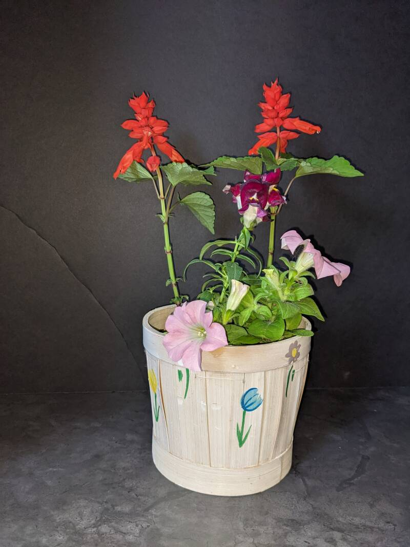 Mother's Day Flowering Wooden Spring Pot