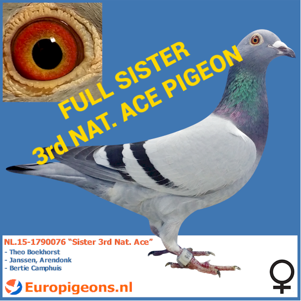 "NL.15-1790076 ""Sister 3rd Nat. Ace"""