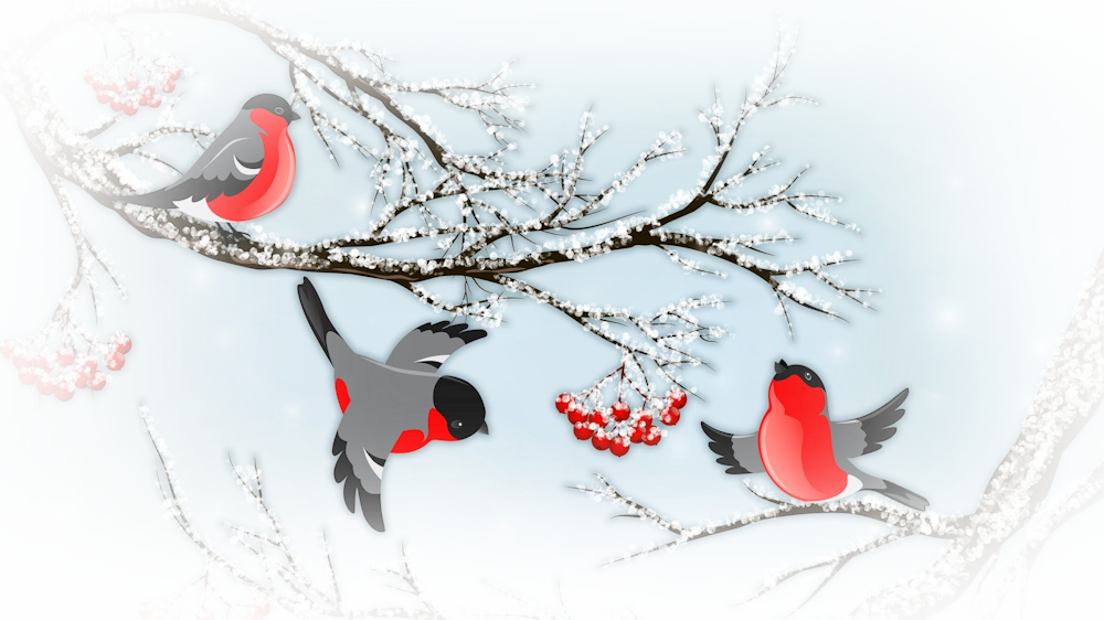 2194704-1920x1080-frolicing-winter-finch_orig.png