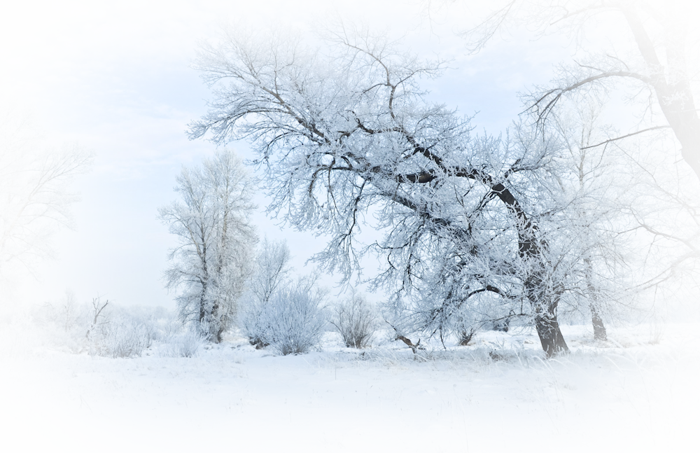 1916887-1920x1243-winter-and-forest_orig.png