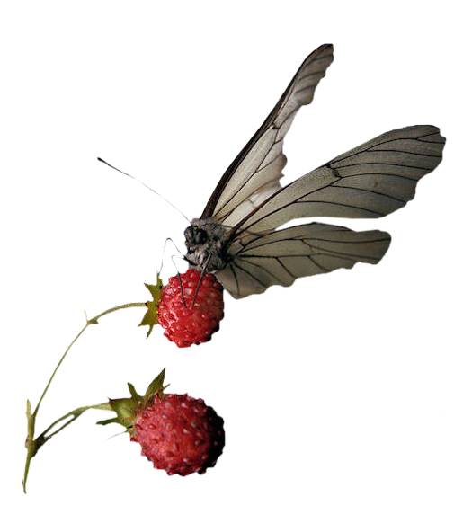 Butterfly_and_fruits_CibiBijoux.png