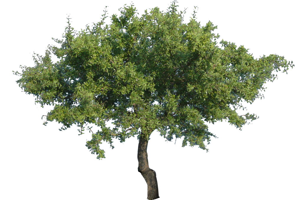 tree_2__png_with_transparency__by_bupaje-d65amxg.png