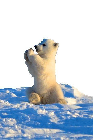 baby-polar-bear-cute-nails-pinterest.png