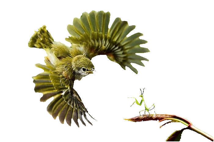 bird-vs-praying-mantis-photos-amazing-animals-nature-beautiful-birds-praying-mantis-photography.png
