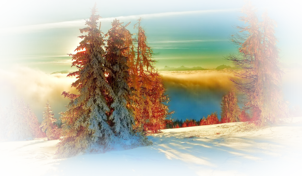1872332-1408x821-golden-trees-in-the-white-winter-3357-1280x800_orig.png
