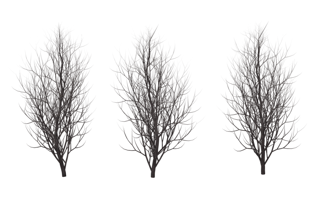 winter_trees_01_by_wolverine041269-d621vou.png